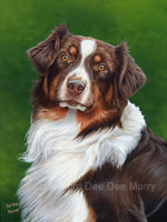 dog pet portraits